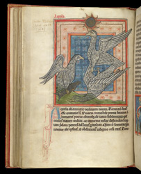 Eagles, In A Bestiary f.35v